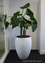 mooie plant in grote pot