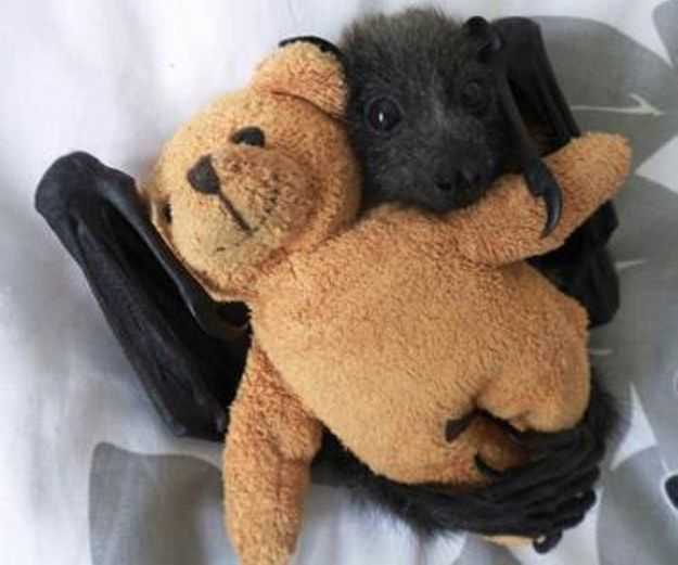 THEY JUST WANT TO BE LOVED. | Community Post: This Is Why We Should All Love Bats