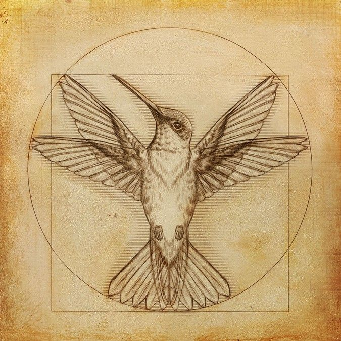 A tattoo sketched by wgcosta for www0310. This black and grey hummingbird illustration takes its inspiration from DaVinci's Vitruvian Man #tattoo #art #design