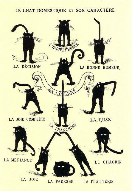 Le chat domestique et son caractère - The domestic cat and his temper