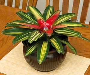 25 best images about non toxic house plants cat safe on for Large non toxic house plants