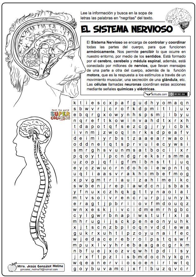 Sistema nervioso                                                                                                                                                                                 Más