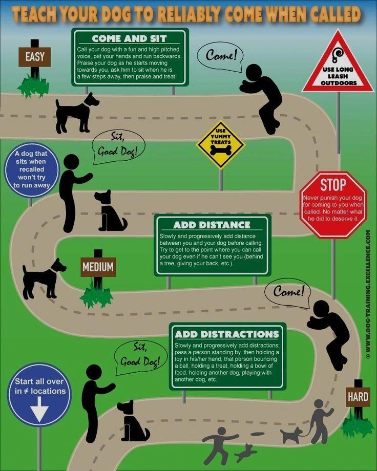How Can You Teach A Dog New Tricks Training Your Dog Dog