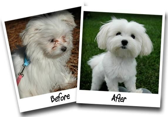 Go from Tear to Clear with Angels' Eyes®!   Some dogs and cats eyes water, which causes a stain on the fur just below their eyes. When the facial hair is wet from excess tearing it is the breeding ground for bacteria and yeast. Not only is it unsightly but may be very irritating to your pet. Until Angels' Eyes® products came along, it was difficult to eliminate these reddish brown stains. Angels' Eyes® products are available at Pet Mart.