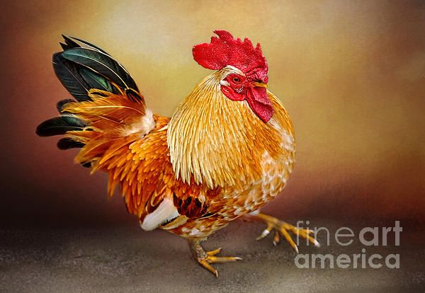 #LE #COQ #D'OR by #Kaye #Menner #Photography Quality Prints and Cards at: http://kaye-menner.artistwebsites.com/featured/le-coc-dor-by-kaye-menner-kaye-menner.html
