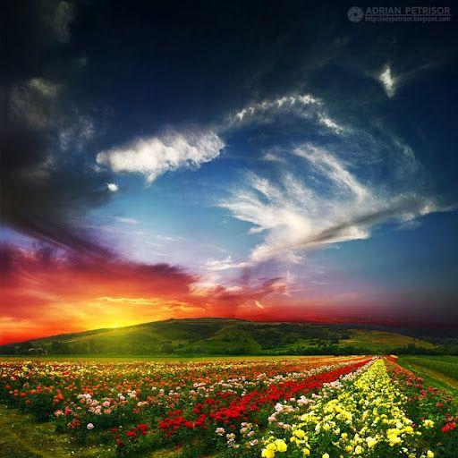 Sunrise in Aiud, Romania #flowers #nature #travel