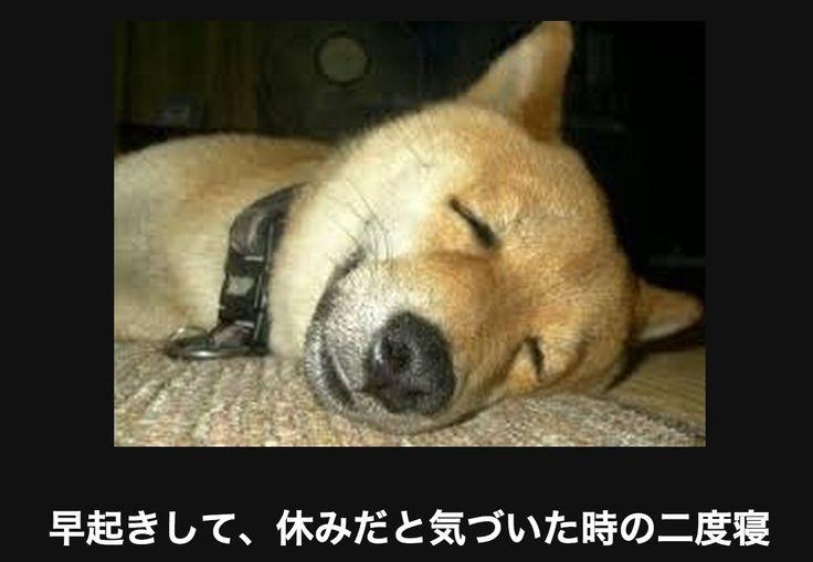 気持ちよさそうに寝る犬
