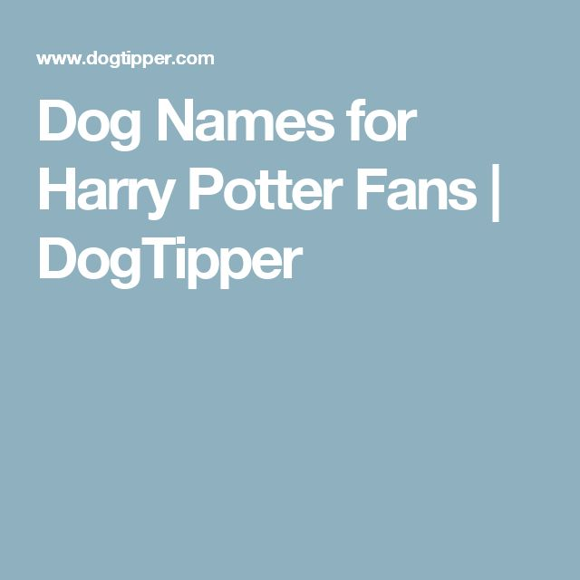 Dog Names for Harry Potter Fans | DogTipper