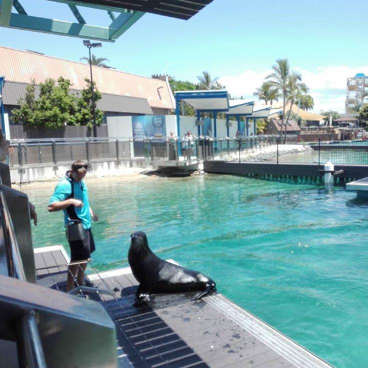 Feeding this cutie  #seals #sealion #Australia #seaworldgoldcoast #marinelife #rescued