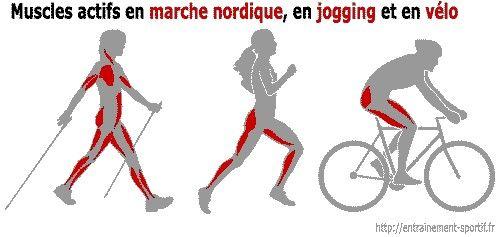 muscles actifs en marche nordique en jogging et en v lo alors que la randonn e p destre la. Black Bedroom Furniture Sets. Home Design Ideas