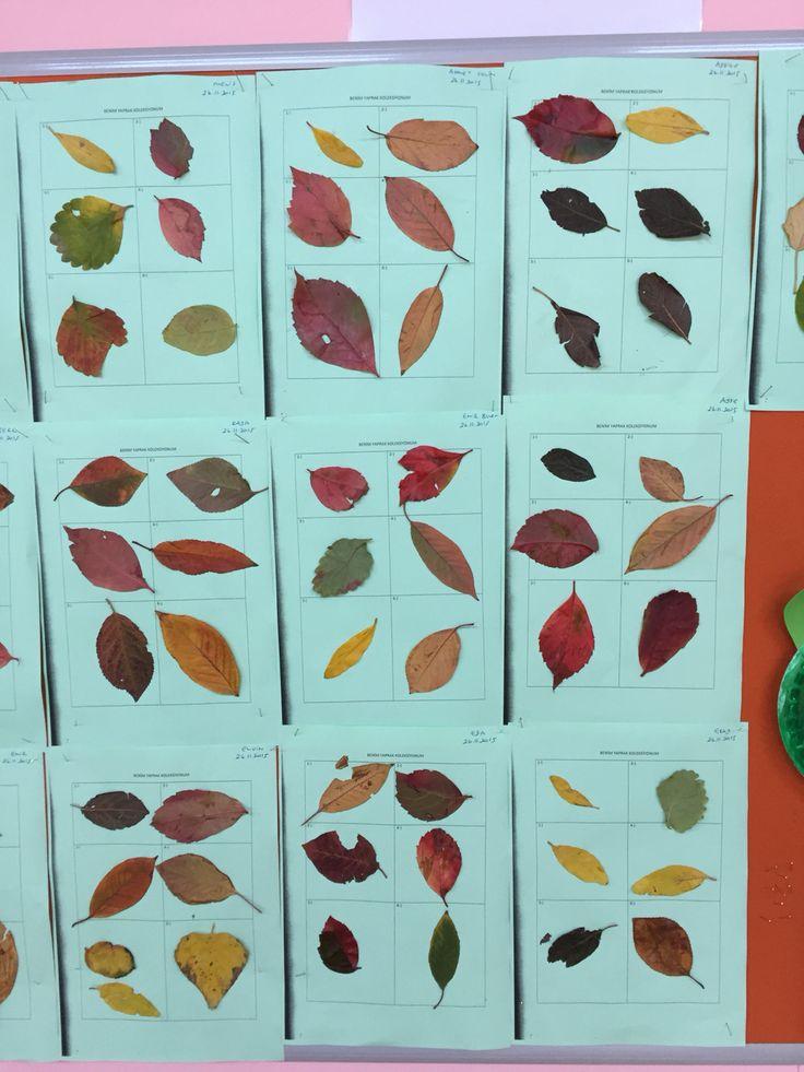 Yaprak koleksiyonu etkinliği