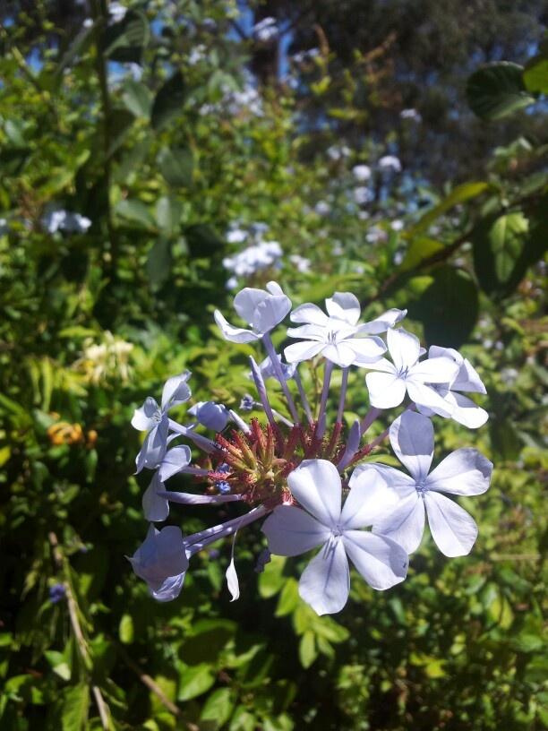 Summer bloom in Margret River