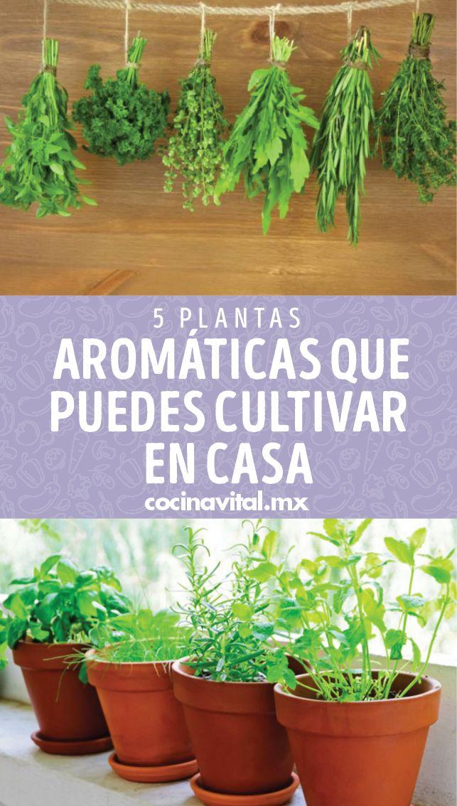 ¡En un balcón, terraza o en casa! Cultivar tus propias plantas en casa es posible y estas plantas aromáticas son perfectas para el ambiente. Photosynthesis, Belleza Natural, Planter Pots, Home And Garden, Otaku, Nature, Decoration, Ideas, Gardens