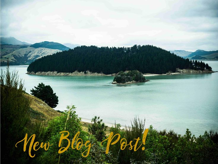 NEW BLOG POST! Pack your bags 'coz we're heading for a day of adventure, exploration, and hiking over Quail Island! Island exploration plus yoga retreat, powerful combination!   http://amp.gs/xT6A  #realartbyartists #nzmade #madeinnewzealand #activewear #nzbrand #fitnessfashion #couragemyloveclothing #QuailIsland #Lyttleton #retreat #yoga #yogasession #meditation #adventure #exploration #hiking