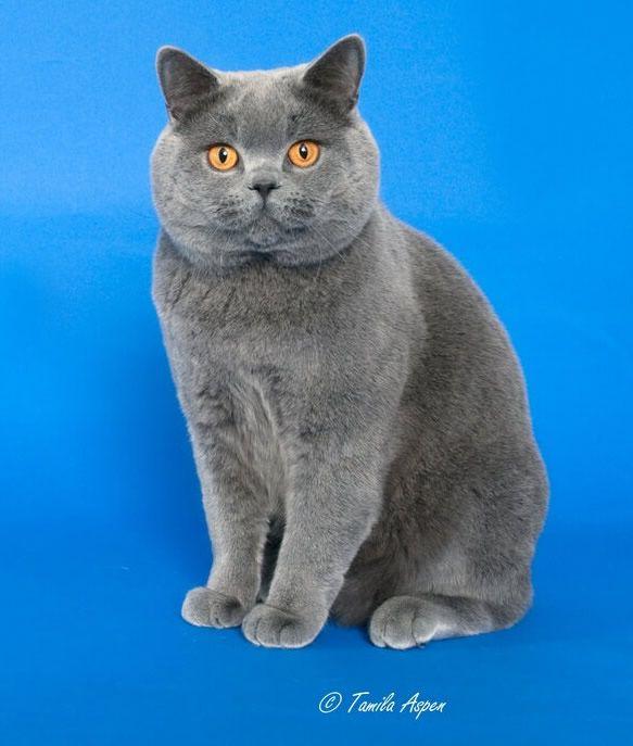Best Oriental Male Cat Names