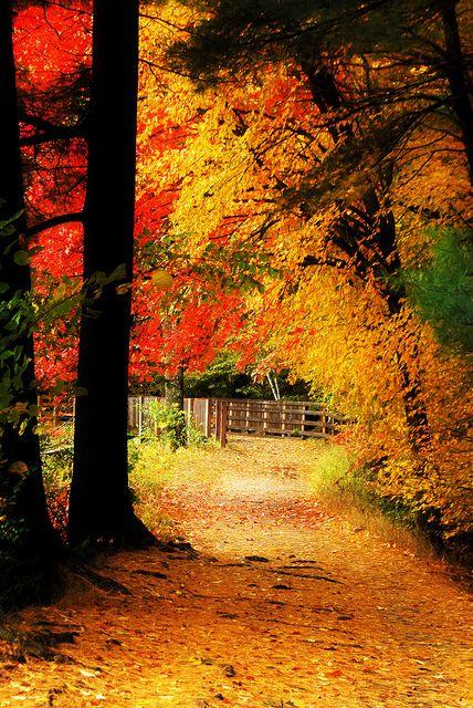 Outono no campo.