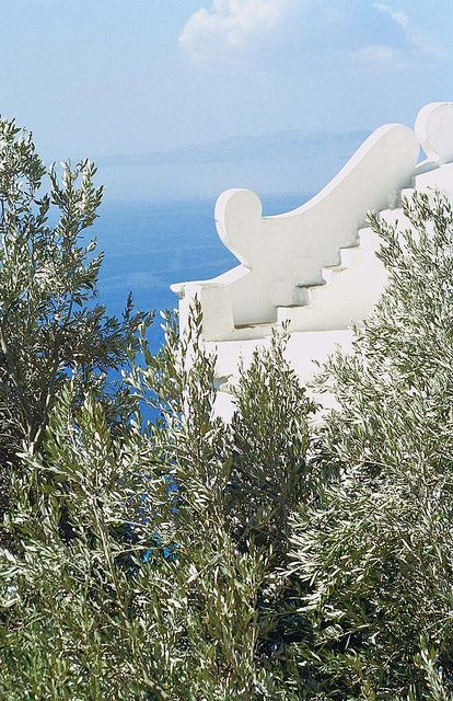Tinos-olive trees with the sea in the background...heavenly!!!