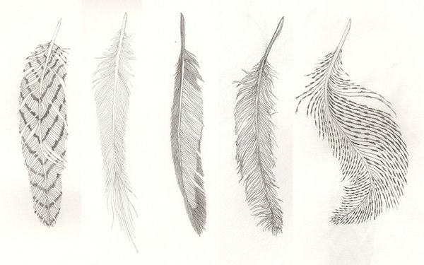 Lara Groot feather sketch - one of the middle three is perfect for a tattoo