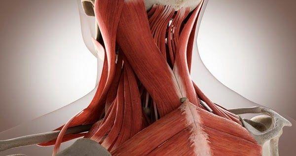 Atunci cand se decid sa faca sport, multe persoane aplica metoda ingrasarii porcului in ajun.  Fie ca vor sa slabeasca pana la o anumita data, fie ca vor sa fie in forma pentru un anumit eveniment, tot acest efort pentru a recupera timpul pierdut inseamna suprasolicitare, care va duce, in cel mai bun caz, la febra musculara.
