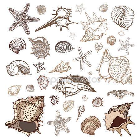 Tengeri kagyló gyűjtemény — Stock Vektor © katyaulitina #36666133