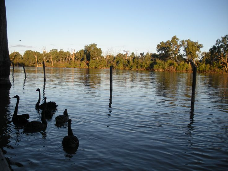 The Murray River at Gol Gol, near Mildura