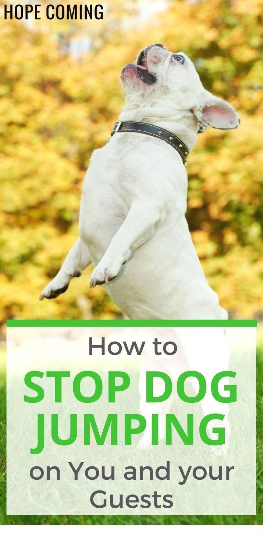 Dog Obedience Training Freehold Nj Doglovers Dogtraining