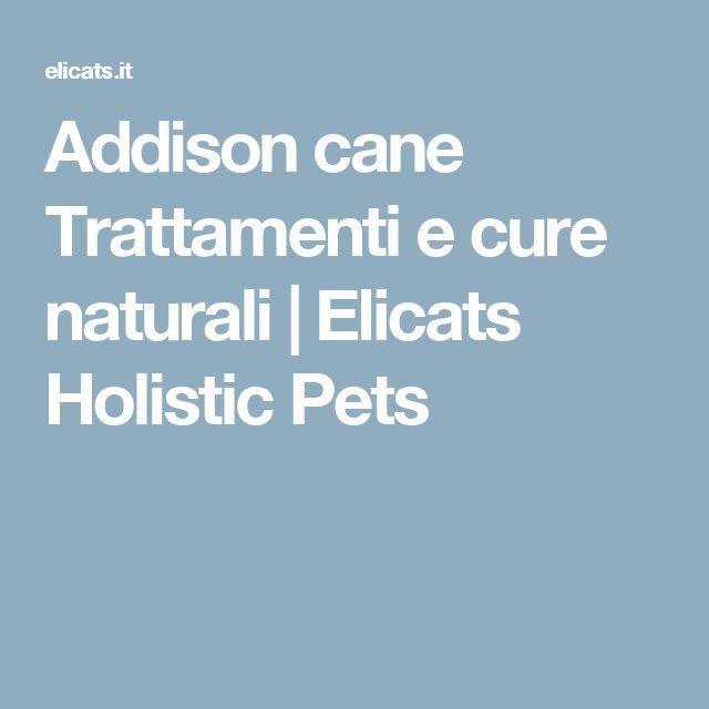 Addison cane Trattamenti e cure naturali | Elicats Holistic Pets