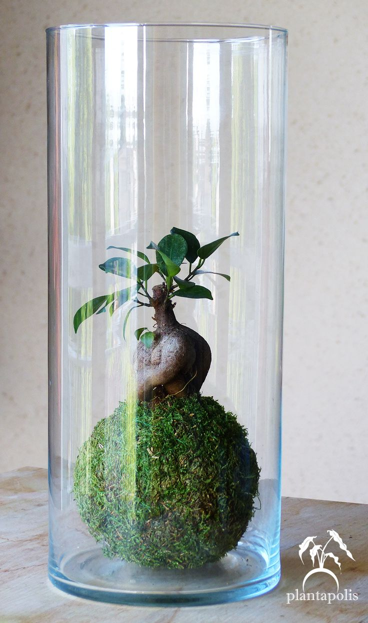 1000 id es sur le th me terrarium sur pinterest plantes. Black Bedroom Furniture Sets. Home Design Ideas