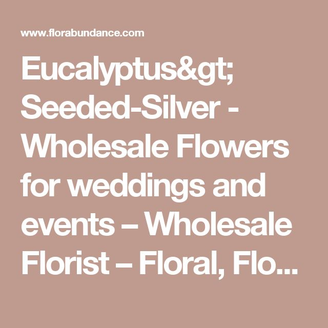 Eucalyptus> Seeded-Silver - Wholesale Flowers for weddings and events – Wholesale Florist – Floral, Floral Supply, Flower Distributor