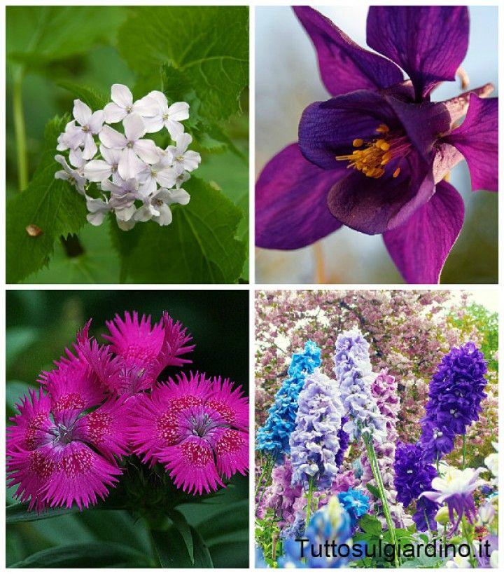PIANTE ANNUALE, BIENNALI, PERENNI: C' E' TANTO DA SAPERE!  Le piante erbacee da fiore e da foglia che abitualmente si coltivano in giardino si dividono in tre grandi categorie: piante erbacee annuali,  piante erbacee biennali,  piante erbacee perenni.  Le annuali sono conosciute da tutti per le stupende fioriture che ci regalano a primavera inoltrata... CONTINUA A LEGGERE SUL SITO: http://tuttosulgiardino.it/piante-annuali-biennali-perenni-ce-tanto-da-sapere/ (#fiori #piante #giardinaggio )