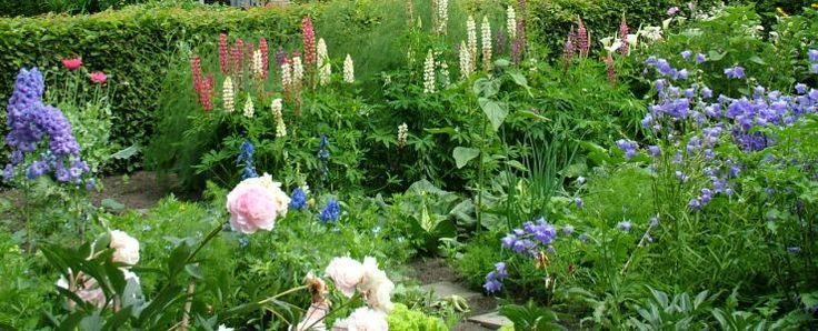 Pioenen, lupinen, riddersporen en Perzisch klokje zijn echte boerenplanten!