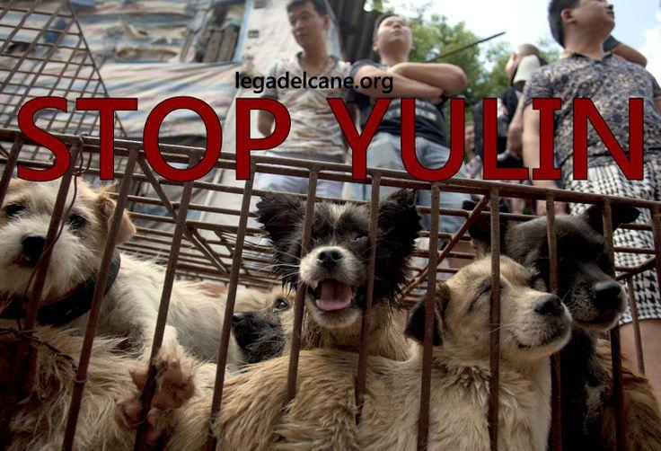 #stopyulin - #LNDC scrive all'Ambasciatore cinese in merito al Festival della carne di cane che si svolgerà fra pochi giorni