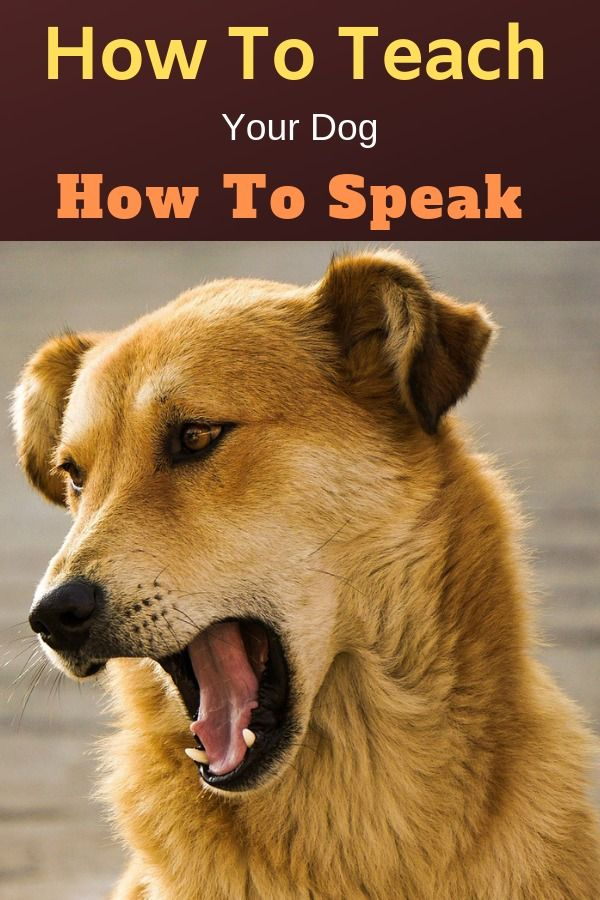 How To Teach A Dog How To Speak Dog Training Dog Barking