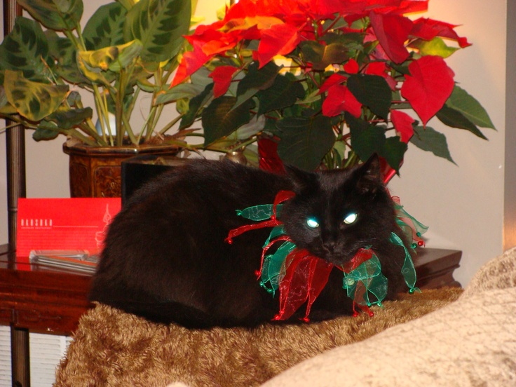 166 best Christmas dogs and cats:-))) images on Pinterest ...