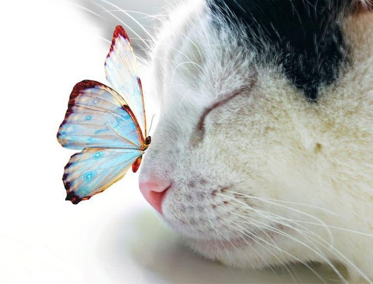 Great shot. The buterfly in the cat