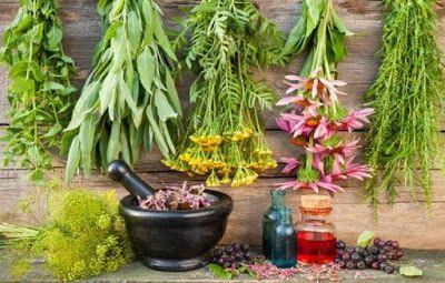 ΥΓΕΙΑΣ ΔΡΟΜΟΙ: Tα θαυματουργά βότανα που βοηθούν την αναπνοή και ...