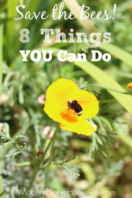 save the bees 8 things you can do modern hippie housewife