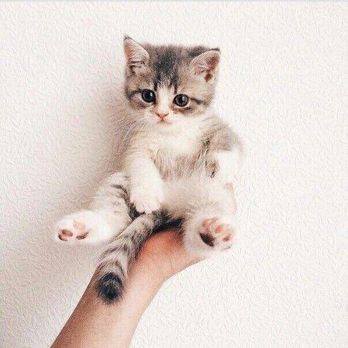 So cute Mehr