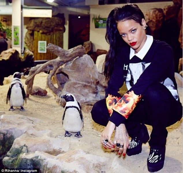 Rihanna with penguins at the Two Oceans Aquarium in Cape Town, South Africa