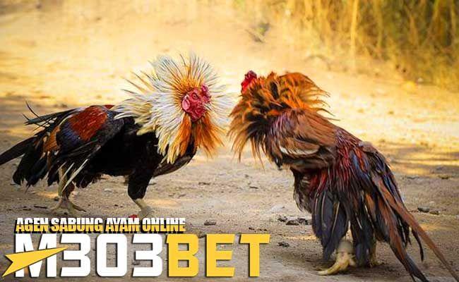 Pin Di Gallery Ayam Bangkok Ayam Saigon Ayam Filipina Ayam Birma Etc