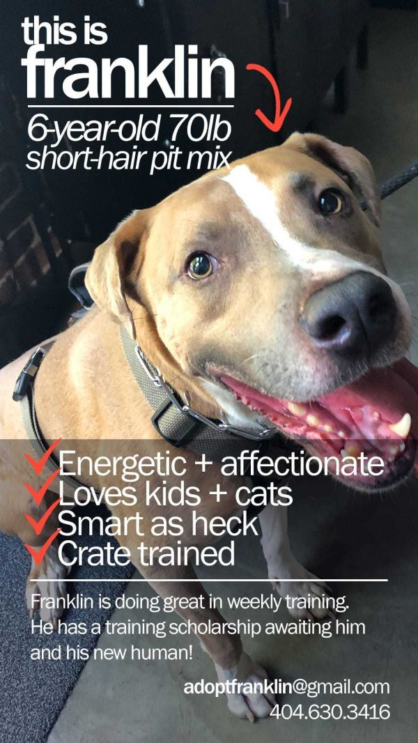 Dogs For Adoption Petfinder Adoption Pet Search Pet Care Tips