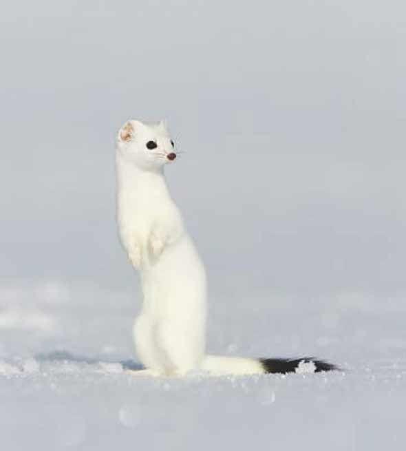 Les 377 meilleures images du tableau Les Animaux en Rêve et ce qui ...