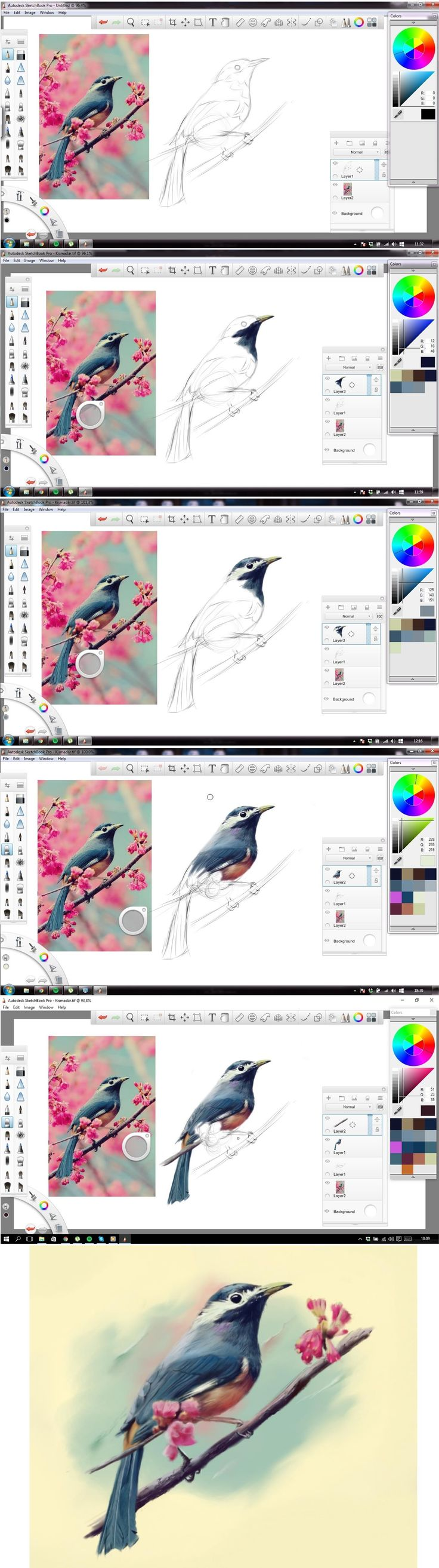 Drawing step-by-step of a blue bird on a cherry tree - digital drawing