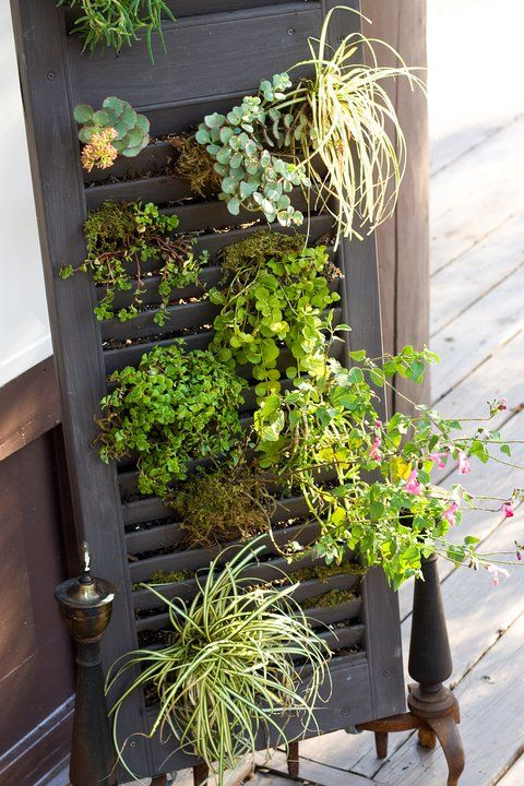 """succulents """"growing"""" in old shutters, what a great """"wall"""" to a garden room"""