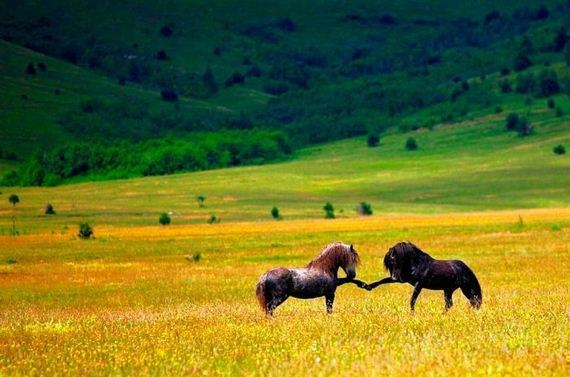 Horse fist bump.   Cuteness   Pinterest   Horses, Best