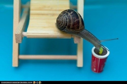 Daily Squee: Creepicute – Slow Sips: Funny Animals, Snails, Animals Insects Fish Birds, Adorable Animals, Animals Pinned, Beautiful Animals, Funnies, Photo