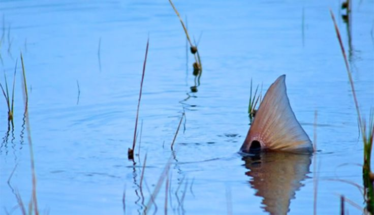 28 best interesting fishing pics images on pinterest a for Fly girl fishing charters