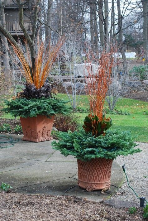 winter containers with copper willowNov 22 105