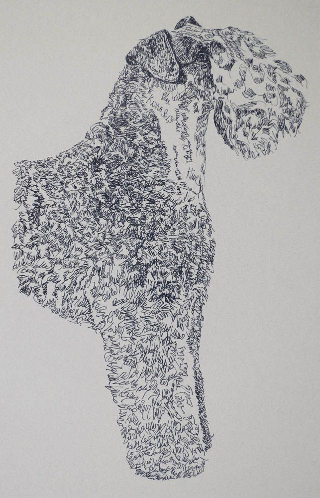 Kerry Blue Terrier: Dog Art Portrait by Stephen Kline - art drawn entirely from the words Kerry Blue Terrier. He also can add your dog's name into the lithograph. drawdogs.com : drawdogs.com His collectors number in the thousands from over 20 countries and every state in the US. Kline's dog art has generated tens of thousands of dollars for dog rescues worldwide.