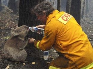 Bushfires in Australia, wildlife rescue. <3